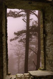 Mist forest trees stone window Stock Images