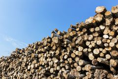 Forest pine trees log trunks felled by the logging timber indust stock photography