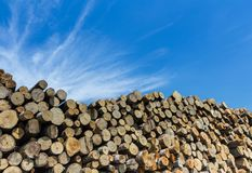 Forest pine trees log trunks felled by the logging timber industry. Large quantity of cut and stacked pine timber waiting to be transported, prepared for winter stock images
