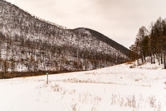 Forest of pine trees and snow covered mountain at Olkhon Island Royalty Free Stock Image