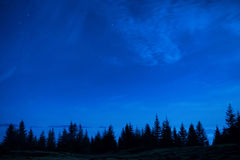 Forest of pine trees under blue dark night sky Stock Photo