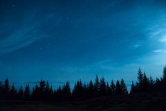 Forest of pine trees under moon and blue dark night sky stock photography