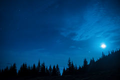 Forest of pine trees under moon and blue dark night sky Stock Photos