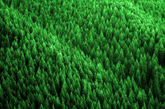 Forest of Pine Trees in Wilderness Mountains Royalty Free Stock Photography