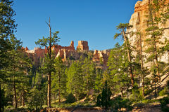 Forest of Pines Beneath Orange Hoodoos Royalty Free Stock Photos