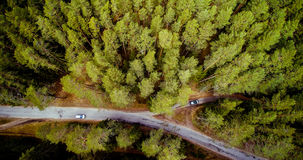 Forest of pines and road stock image