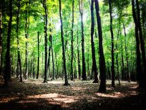 Forest Pinhole Royalty Free Stock Photography