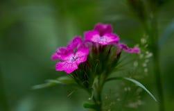 Forest Pink Flower hermoso Imagen de archivo libre de regalías