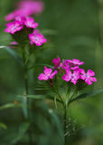 Forest Pink Flower hermoso Fotos de archivo