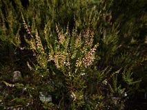 Forest Plant Imagenes de archivo