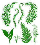 Forest plants. And flowers on a white background vector illustration