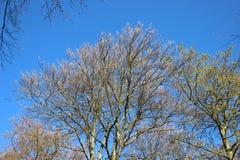 Forest Plants Budding Young Green-Bladeren in de Lente royalty-vrije stock afbeeldingen