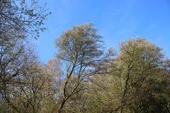 Forest Plants Budding Young Green-Bladeren in de Lente stock fotografie