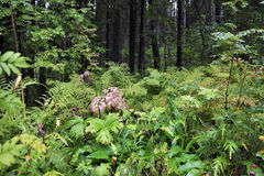 Forest plants Stock Photos