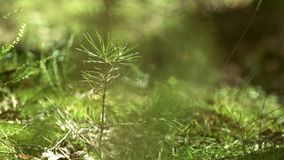 Young plant of pine moss and grass grow in forest. Forest plants and grass. Forest plants and grass growing at very bottom. Young plant of pine moss and grass stock video