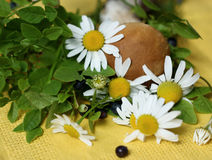 Forest plants on a napkin. Forest plants. The blueberry bushes and a small white mushroom lying on yellow fabric cloth Royalty Free Stock Photography
