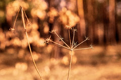 Forest plants reed, web Stock Images