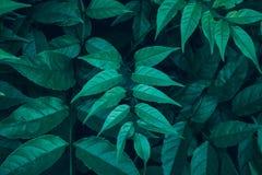 Forest Plants sauvage vert frais Fern Leaves Lush Fond botanique de nature Affiche de papier peint Station thermale organique de  photo stock