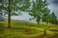 Forest on the plateau, path around Stock Images