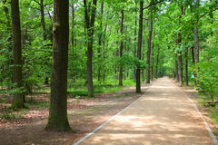 Forest in Poland Stock Photo