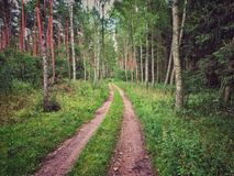 Forest in Poland Royalty Free Stock Photos