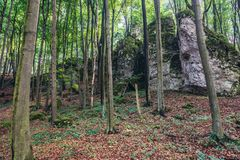 Forest in Polish Jura region. Natural preserve called Falcon Mountains in Polish Jurassic Highland, Silesia region in Poland royalty free stock image