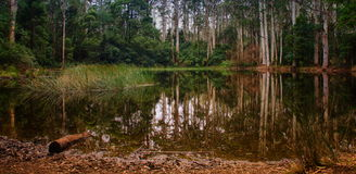 Forest pond Stock Image
