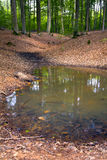 Forest pond Stock Photo