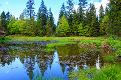 Forest Pond Foto de Stock Royalty Free