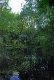 Forest Pond Imagen de archivo