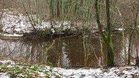 Forest Pond almacen de video