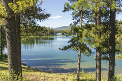 Forest Pond Royalty Free Stock Image
