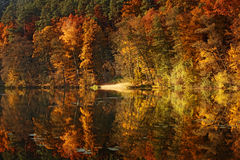 Forest pond in autumn Stock Photography