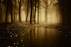 Forest with pond in autumn Stock Photo