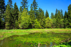 Forest pond. In Bieszczady Mountains, South-East Poland Royalty Free Stock Photos