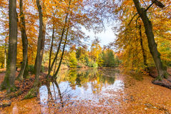 Forest pond covered with autumn leaves of beech trees. Woodland pond covered with colorful fall leaves of beech trees Stock Photo