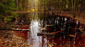 Forest pond. In fall season, red water Royalty Free Stock Photos