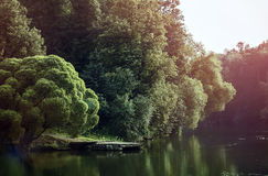 Forest at a pond Royalty Free Stock Photo
