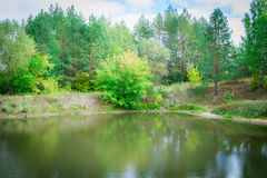 Forest pond Stock Photos
