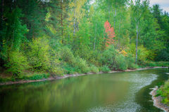 Forest pond Royalty Free Stock Photo