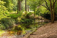 Forest pond with low water level in a lush green spring forest stock photos