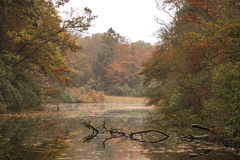 Forest pond lying peaceful surrounded by autumn colored woods. Early morning walk in the forest is as always very peacefull stock photography