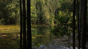 Forest Pond místico Atmosfera bonita e calma no pântano entre árvores HD slowmotion vídeos de arquivo