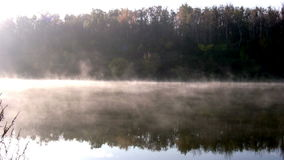 Forest pond. Morning stock footage