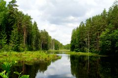 Forest pond. Single wild pond among the Belarusian forests stock image