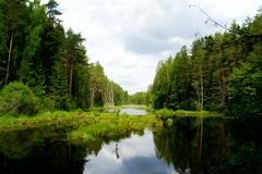 Forest pond. Single wild pond among the Belarusian forests stock photography