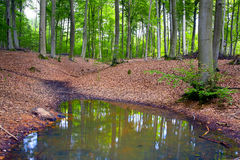 Forest pond Stock Images