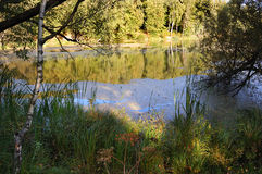 Forest Pond Sommer Lizenzfreie Stockfotografie