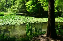 Forest, pond water, shade, summer stock photography