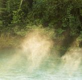 Forest Pool Belize tranquille Photo stock